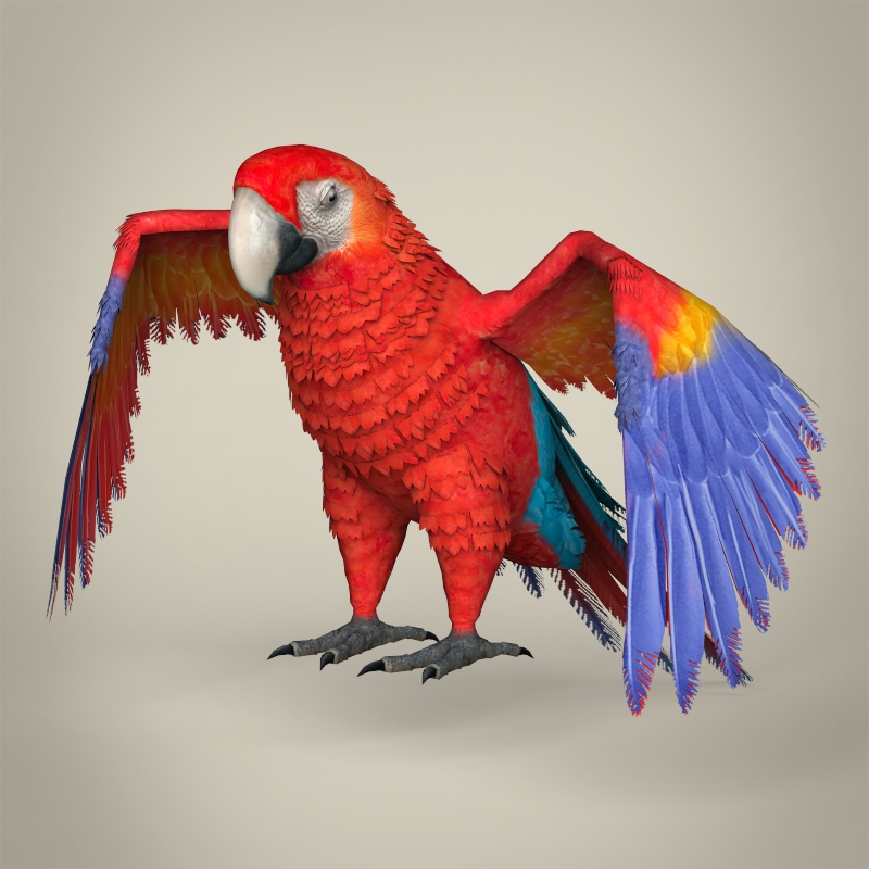 low poly realistic parrot 3d model 3ds max fbx c4d lwo ma mb obj 216907