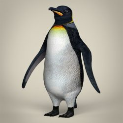 Low Poly Realistic Penguin ( 184.9KB jpg by cghuman )