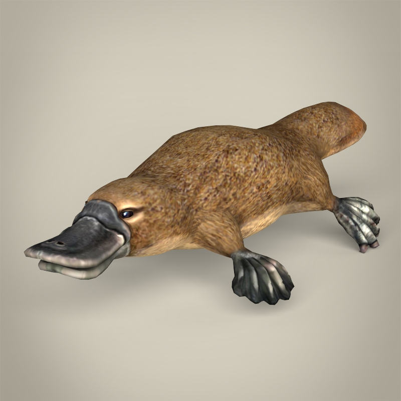 low poly realistic platypus 3d model 3ds max fbx c4d lwo ma mb obj 216925