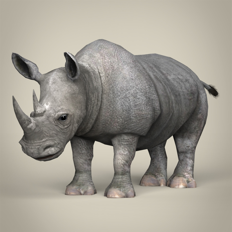 low poly realistic rhinoceros 3d model 3ds max fbx c4d lwo ma mb obj 216934