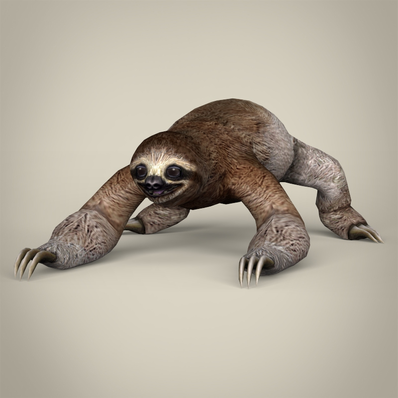 low poly realistic sloth 3d model 3ds max fbx c4d lwo ma mb obj 216992