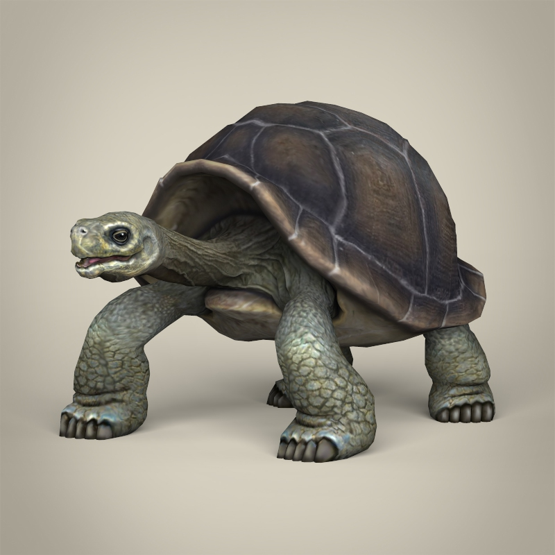 low poly realistic tortoise 3d model 3ds max fbx c4d lwo ma mb obj 217001