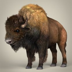 Low Poly Realistic Montana Buffalo 3d model 0