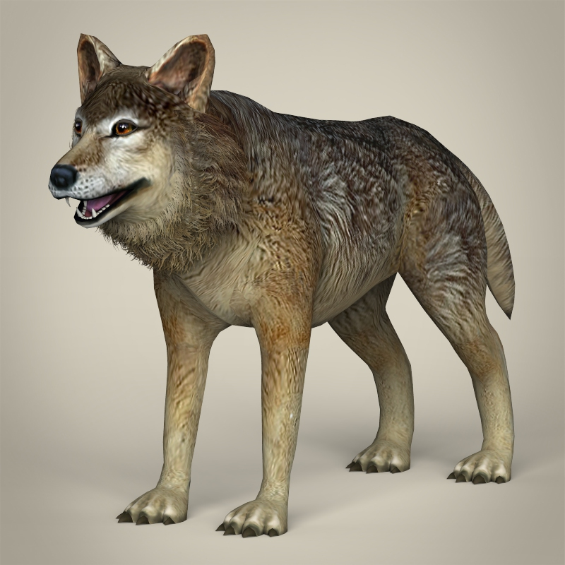 low poly realistic wolf 3d model 3ds max fbx c4d lwo ma mb obj 217028