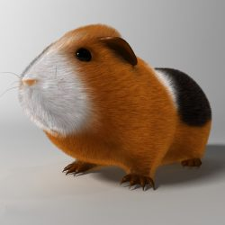 Guinea pig (Cavia porcellus) Rigged 3d model 0