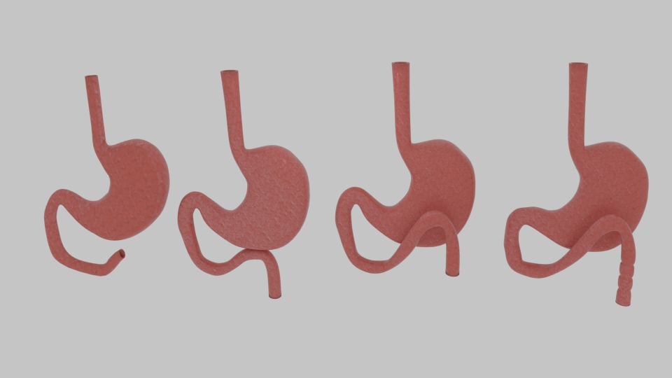 curve stomach 3d model blend 218074