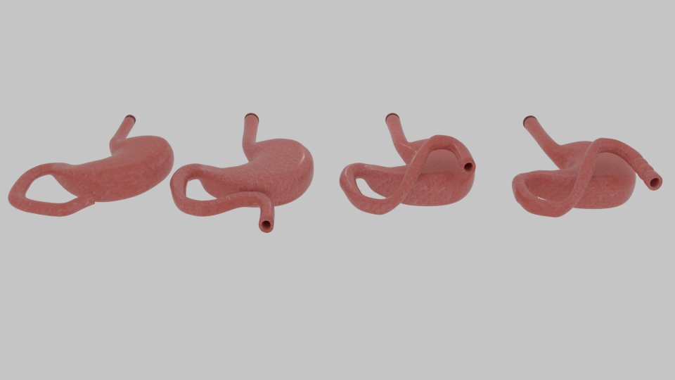 curve stomach 3d model blend 218077