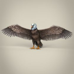 Low Poly Realistic Eagle 3d model 3ds max fbx c4d lwo lws lw ma mb obj