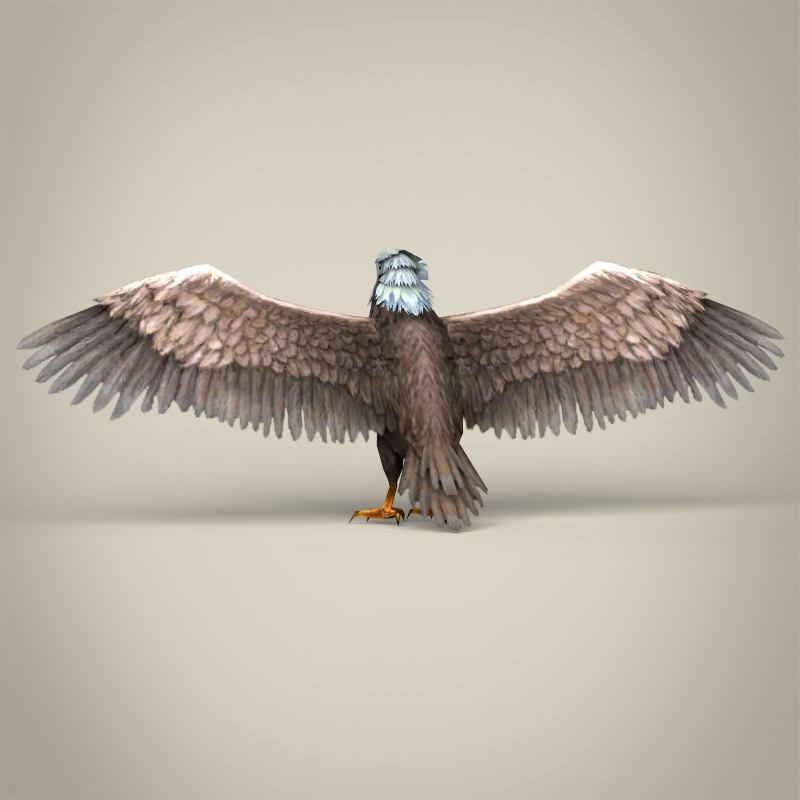low poly realistic eagle 3d model 3ds max fbx c4d lwo ma mb obj 218193