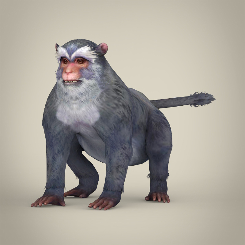 game ready white monkey 3d model 3ds max fbx c4d lwo ma mb obj 219917