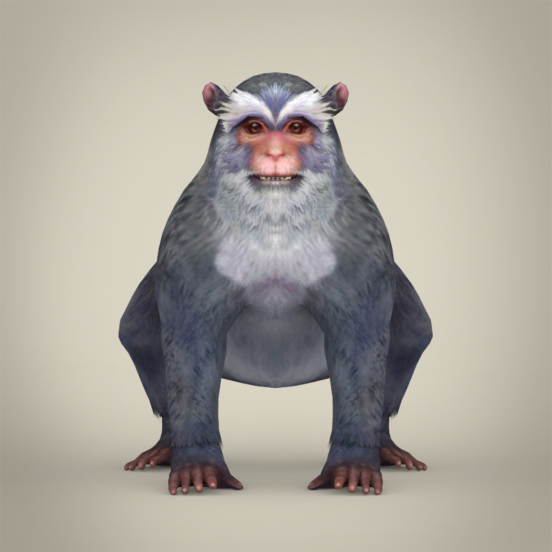 game ready white monkey 3d model 3ds max fbx c4d lwo ma mb obj 219918