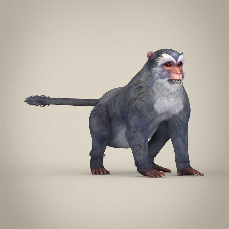 game ready white monkey 3d model 3ds max fbx c4d lwo ma mb obj 219922