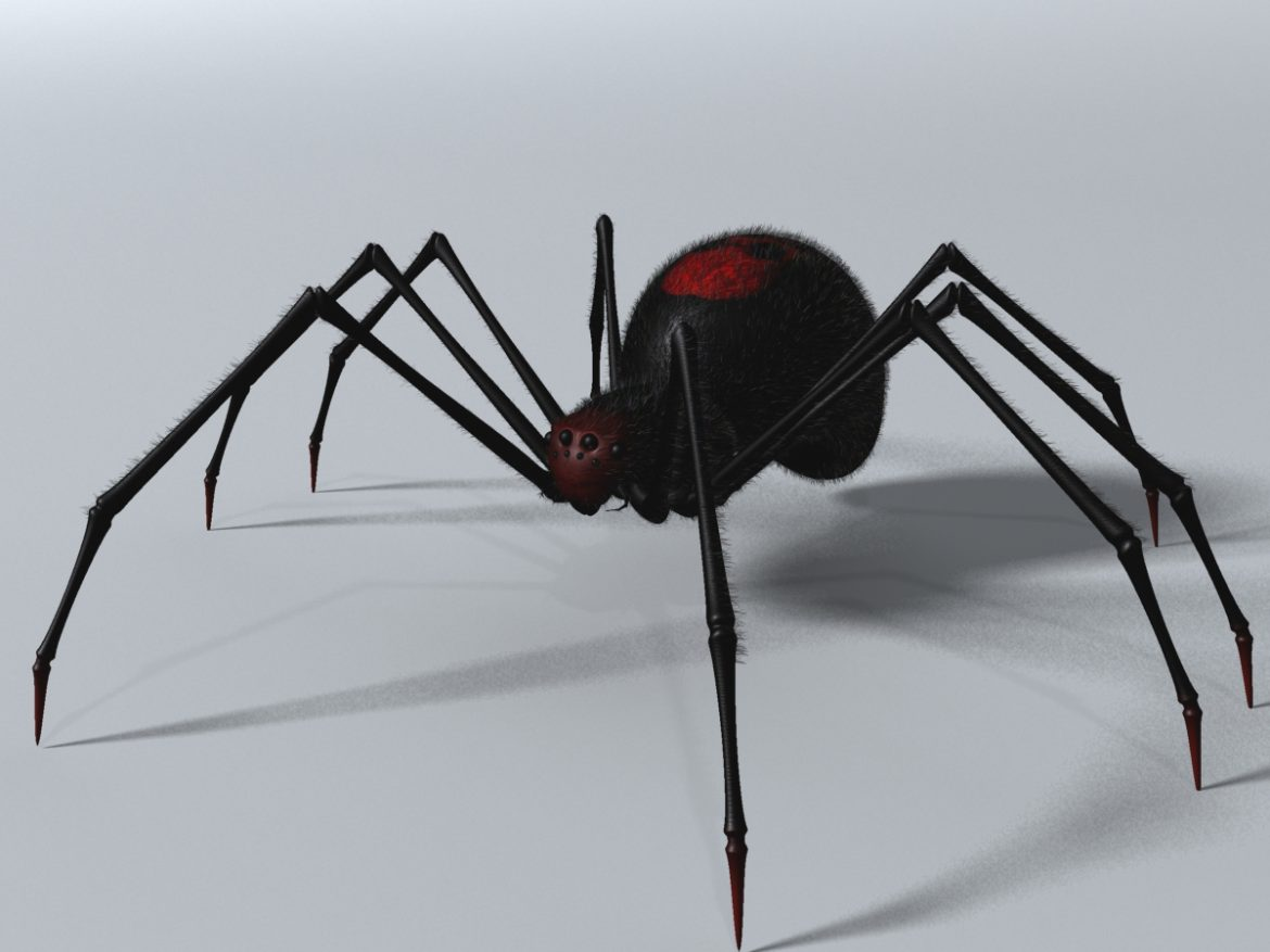 Black Spider Rigged ( 537.62KB jpg by supercigale )