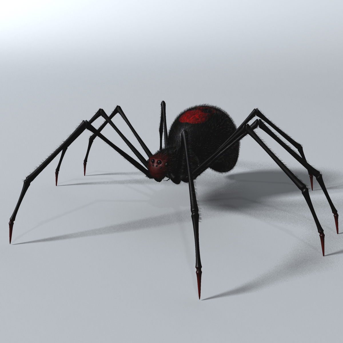 Black Spider Rigged 3d model 3ds max fbx  obj 221103