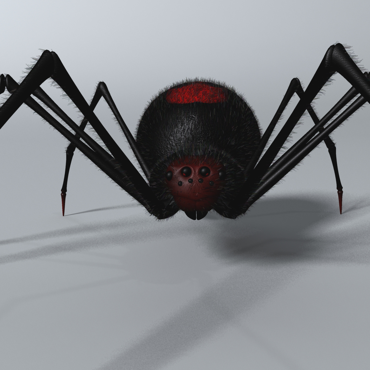 black spider rigged 3d model 3ds max fbx  obj 221104