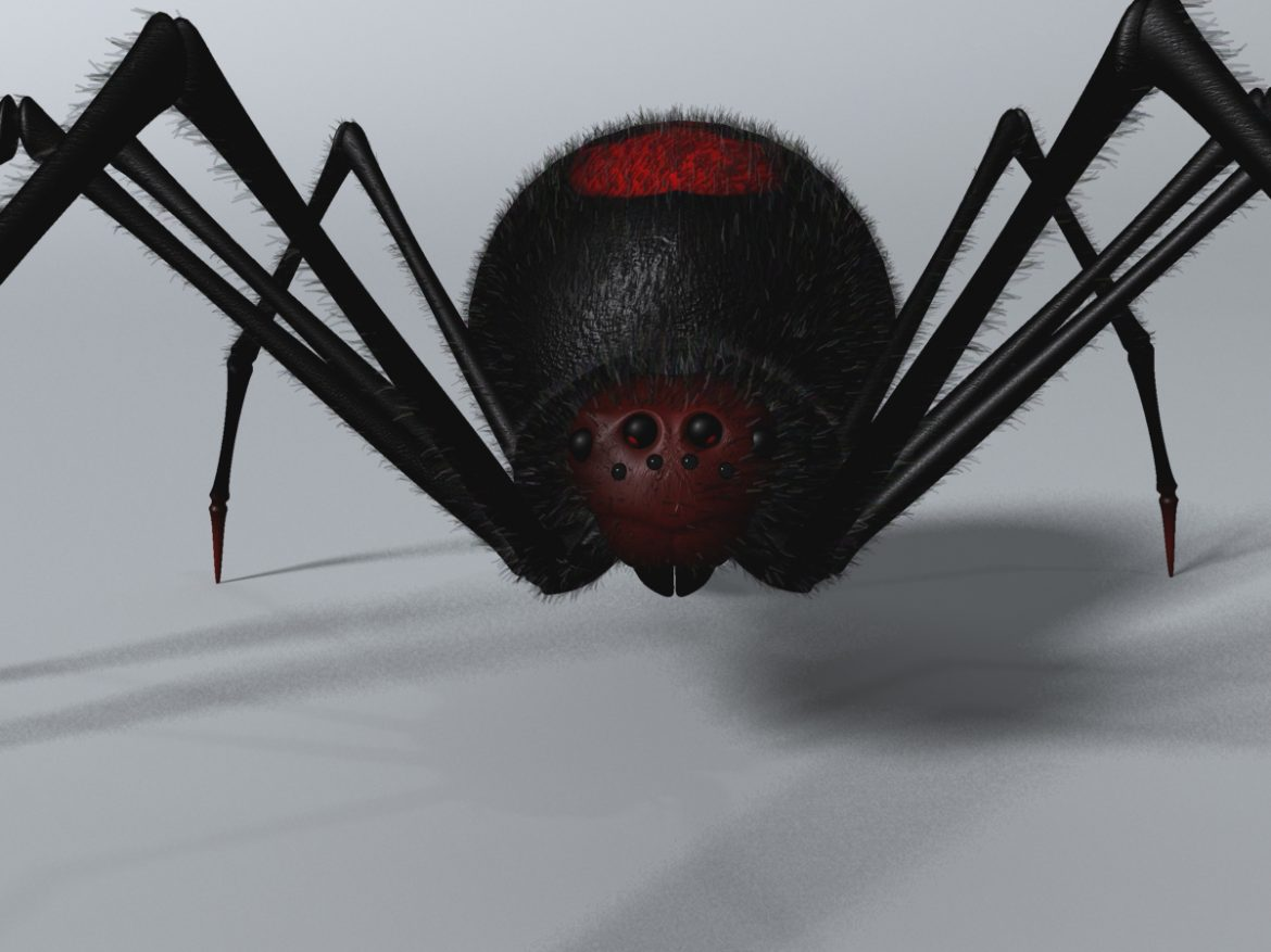 Black Spider Rigged ( 615.13KB jpg by supercigale )