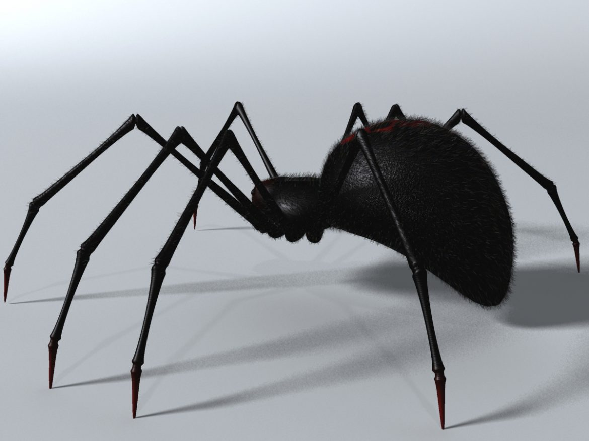 Black Spider Rigged ( 570.92KB jpg by supercigale )