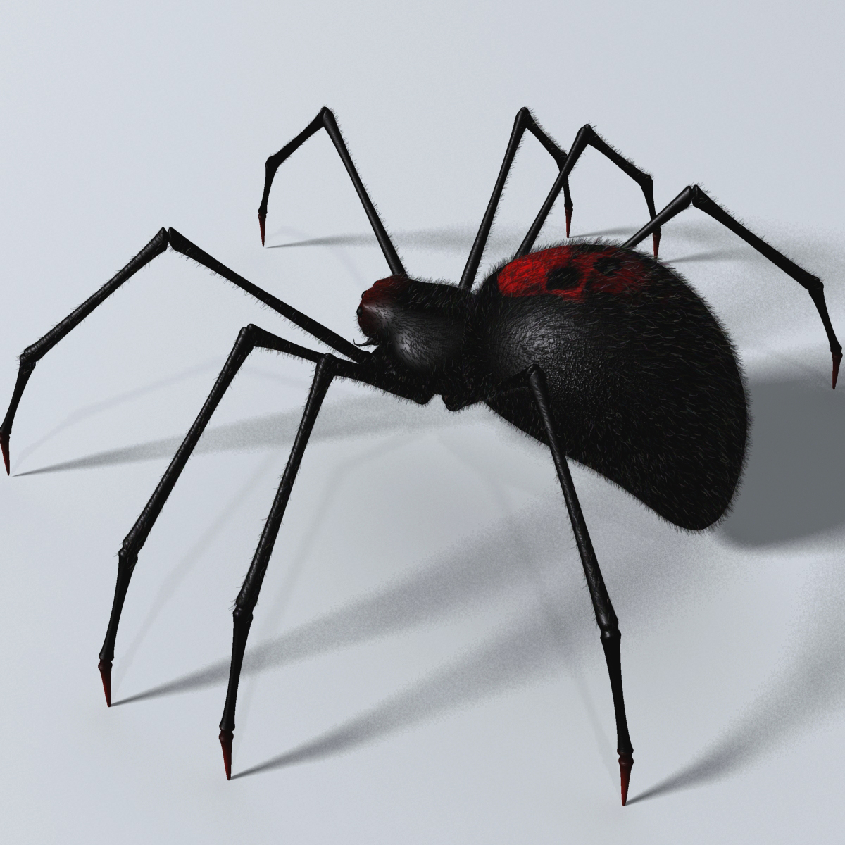 black spider rigged 3d model 3ds max fbx  obj 221106