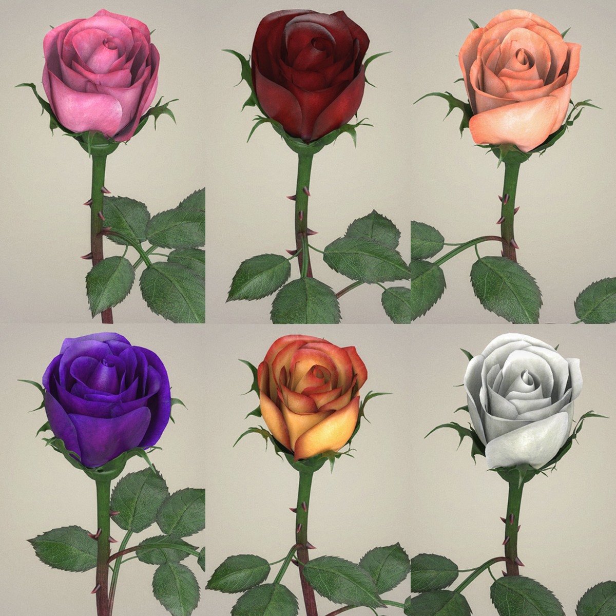 rose flower collection 3d model max fbx c4d ma mb obj 252759