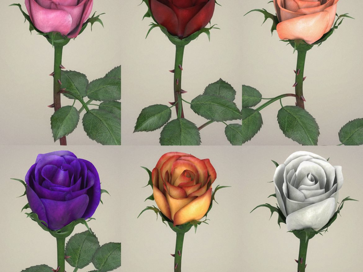 Rose Flower Collection ( 1045.43KB jpg by cghuman )