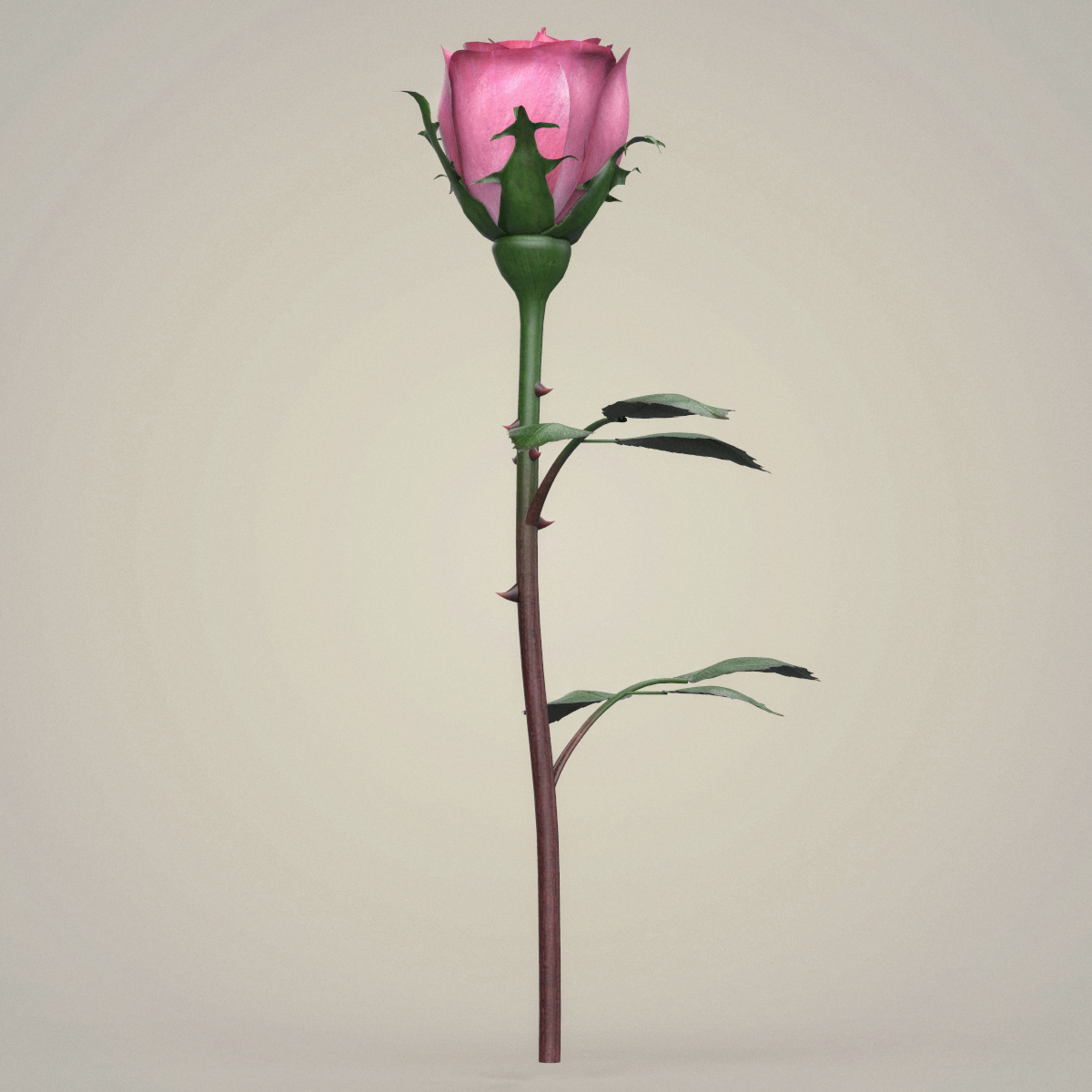 rose flower collection 3d model max fbx c4d ma mb obj 252761