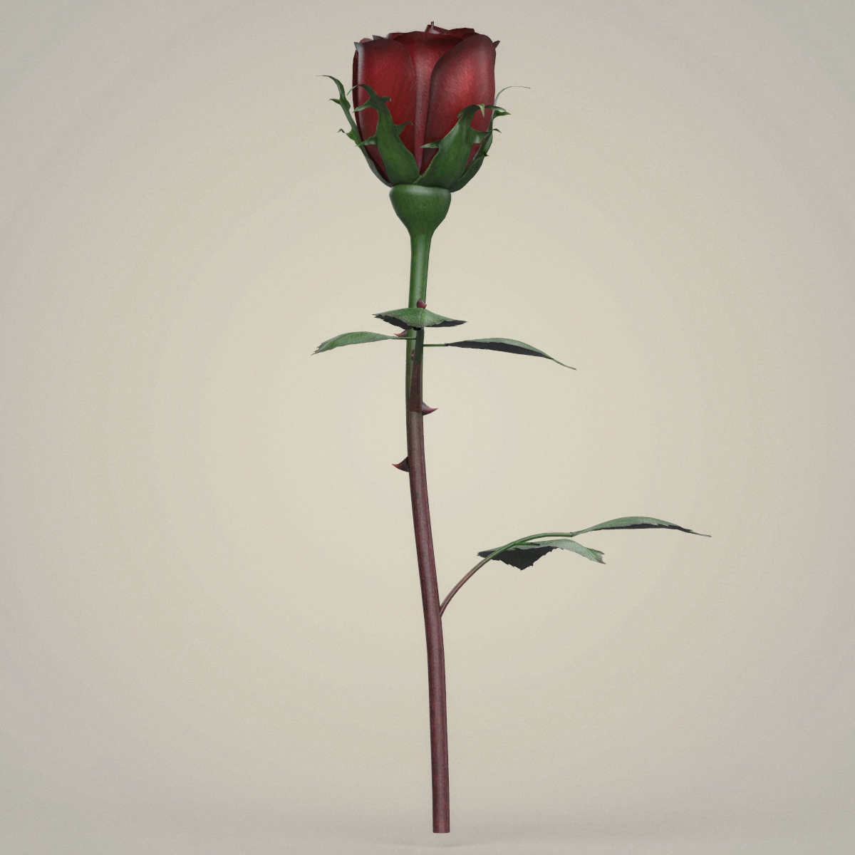 rose flower collection 3d model max fbx c4d ma mb obj 252763
