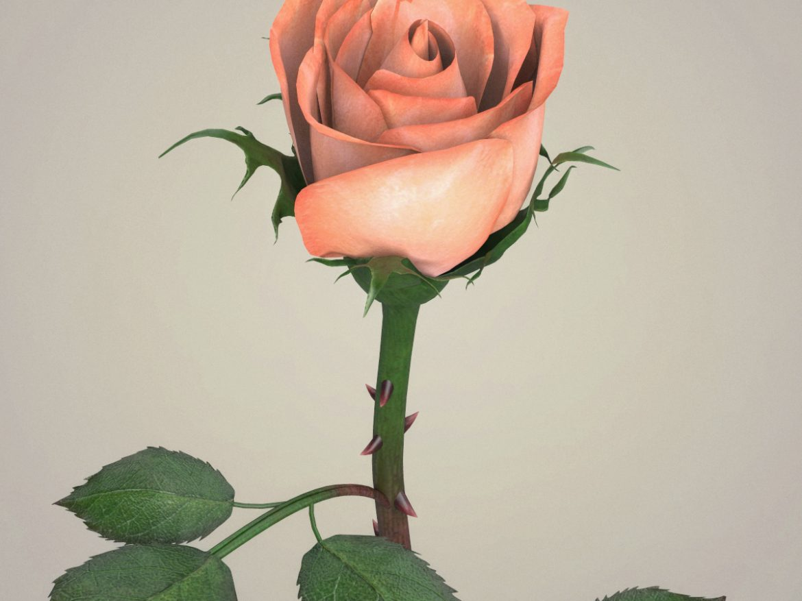 Rose Flower Collection ( 910.06KB jpg by cghuman )
