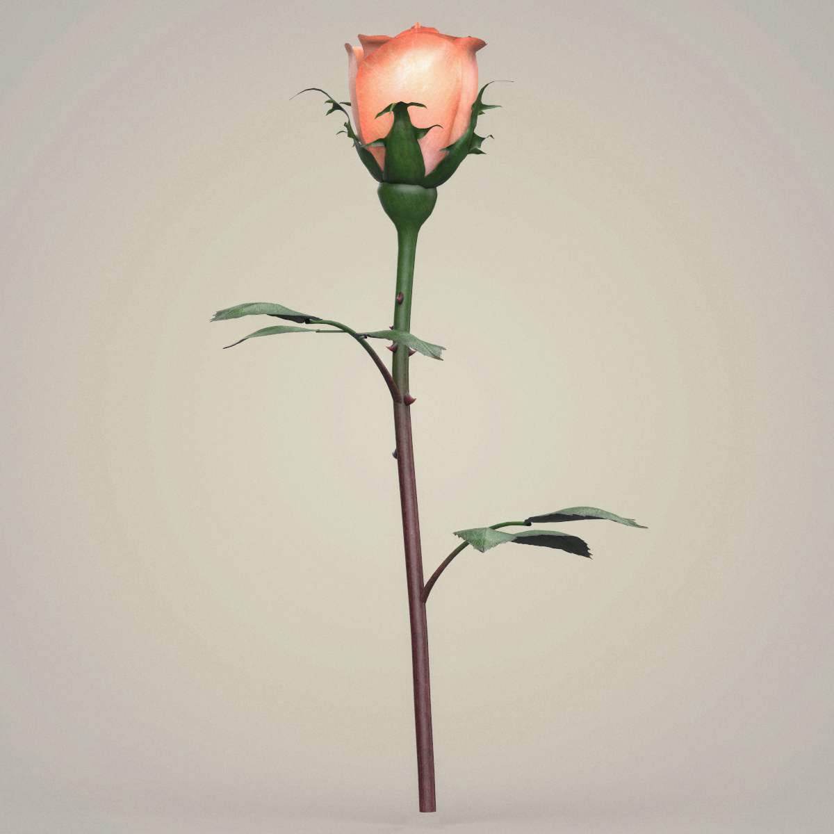 rose flower collection 3d model max fbx c4d ma mb obj 252765