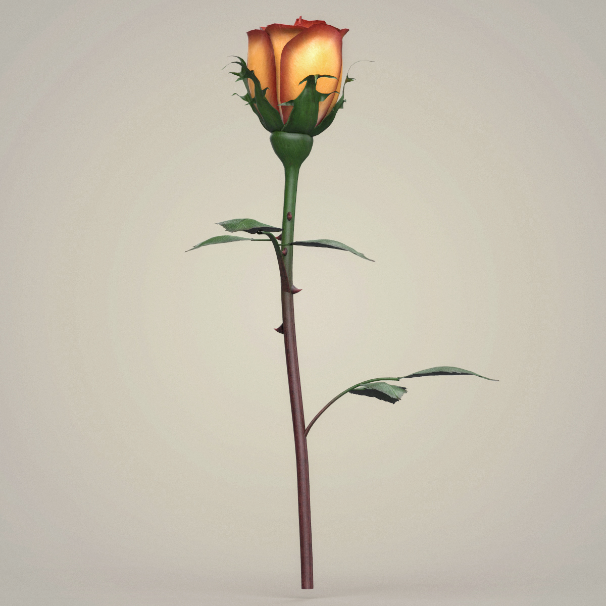 rose flower collection 3d model max fbx c4d ma mb obj 252768