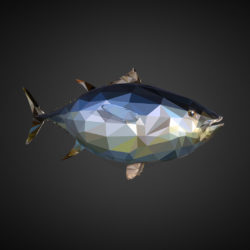 Tuna Low Polygon Art Ocean Fish 3d model 3ds 3ds max plugin fbx ma mb tga targa icb vda vst pix obj