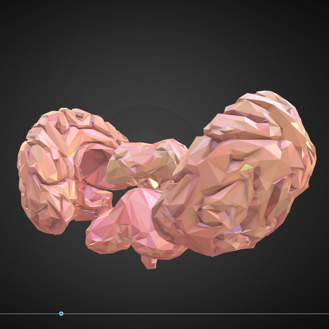 Low Polygon Art Medical Brain Real VR AR low-poly 3d model max 270546