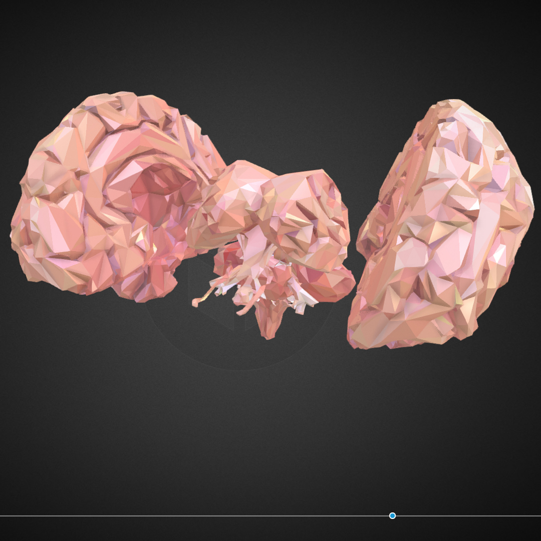 Low Polygon Art Medical Brain Real VR AR low-poly 3d model max 270550