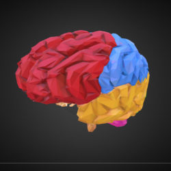 Low Polygon Art Medical Brain Color 3d model 0
