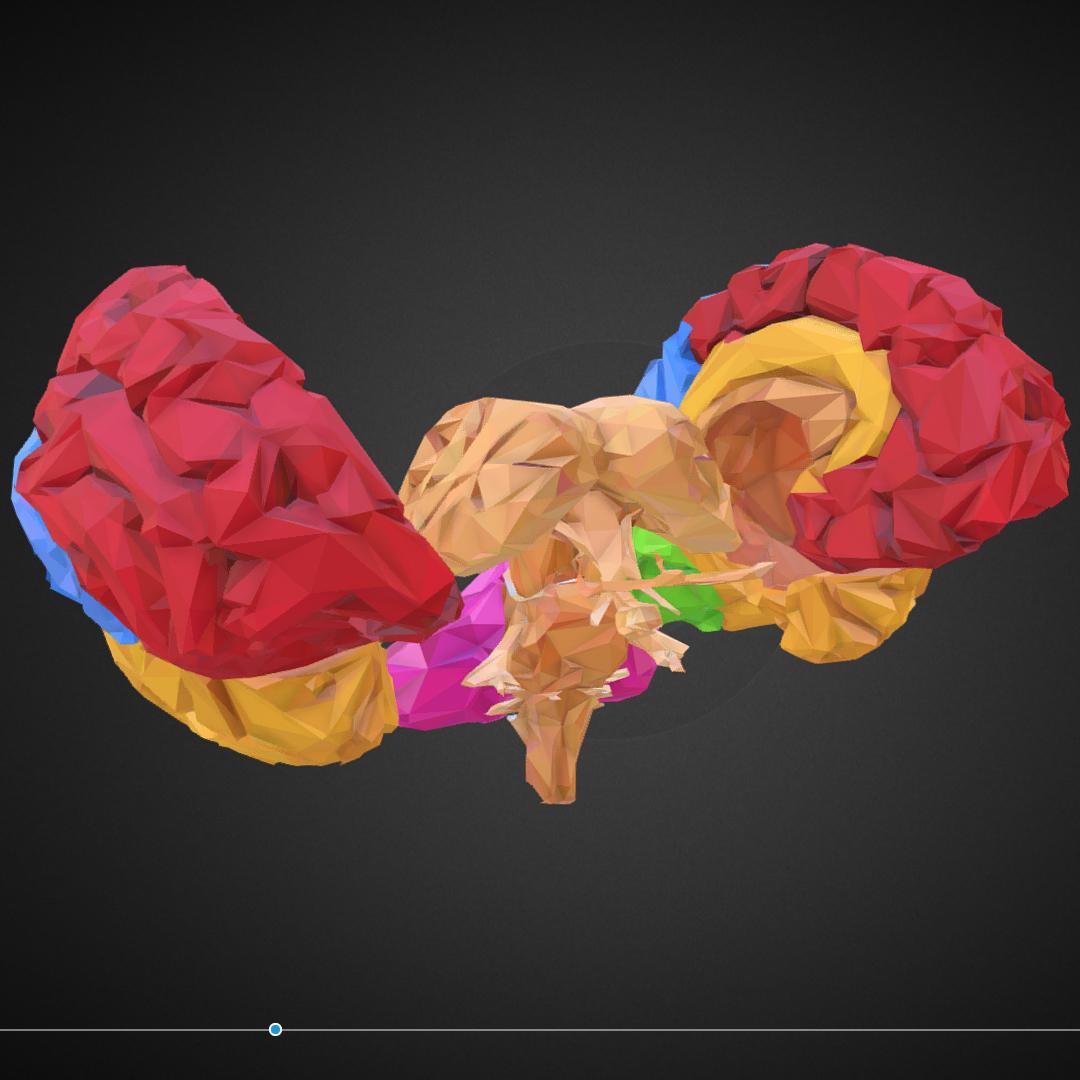low polygon art medical brain color 3d model 3ds 270557