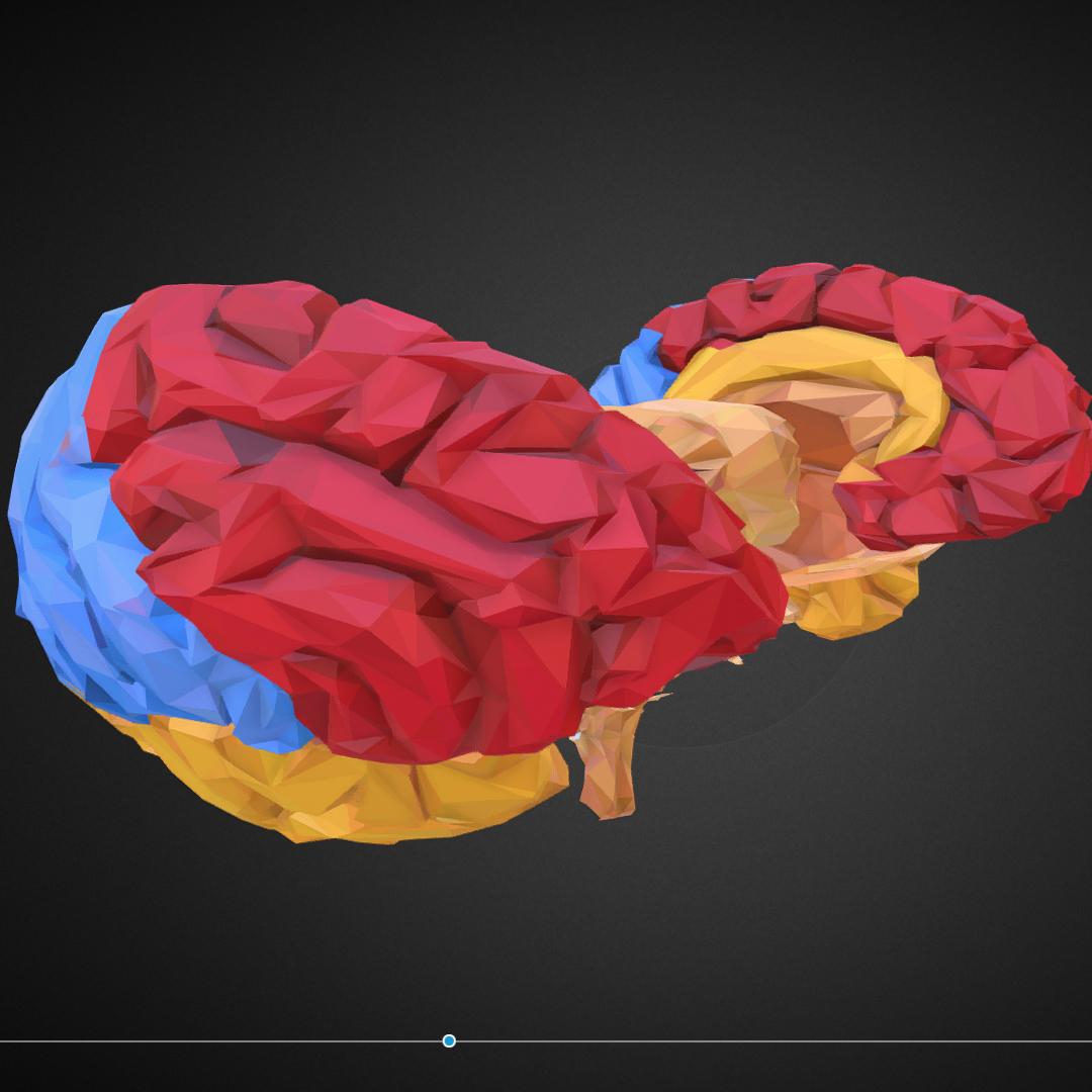 low polygon art medical brain color 3d model 3ds 270558
