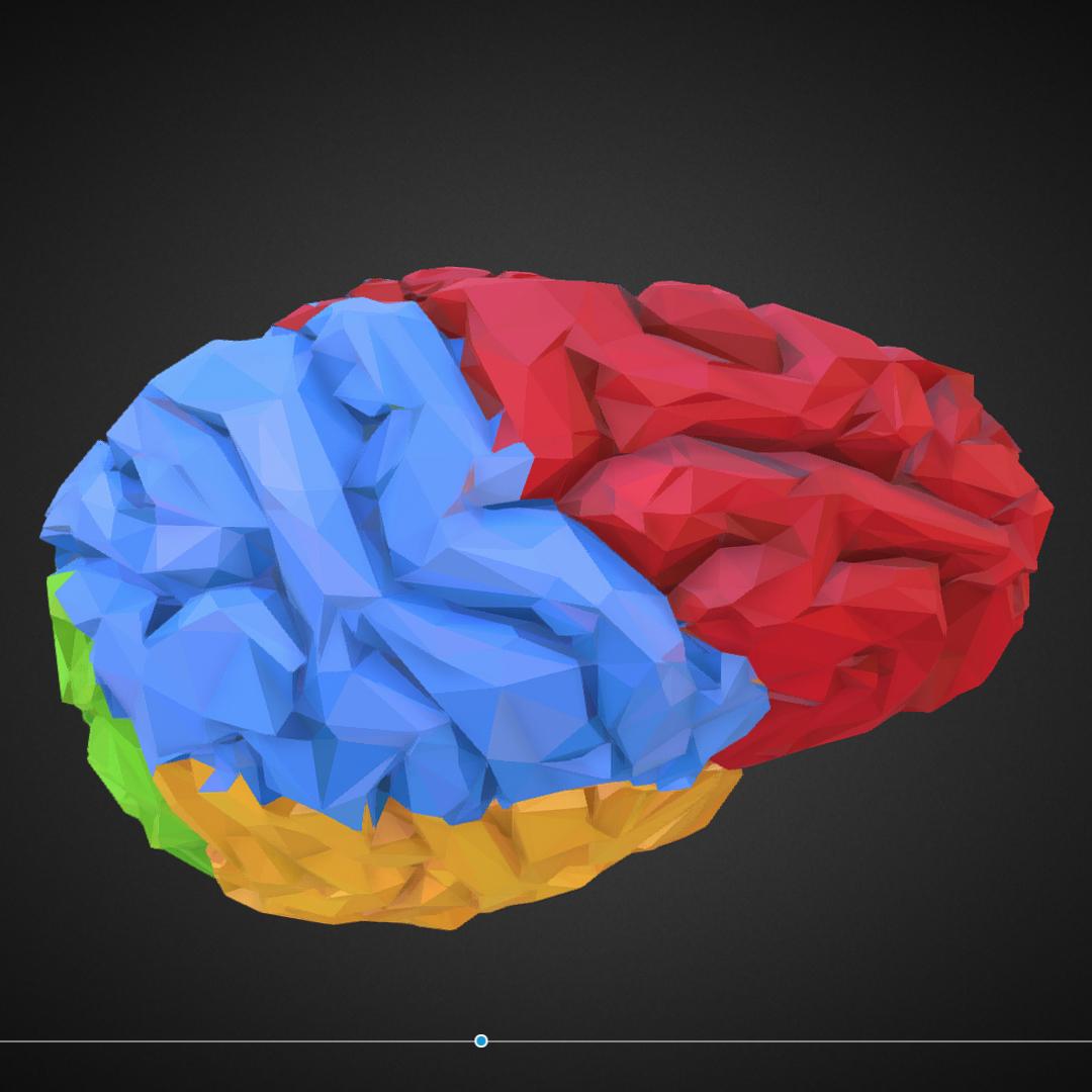 low polygon art medical brain color 3d model 3ds 270559