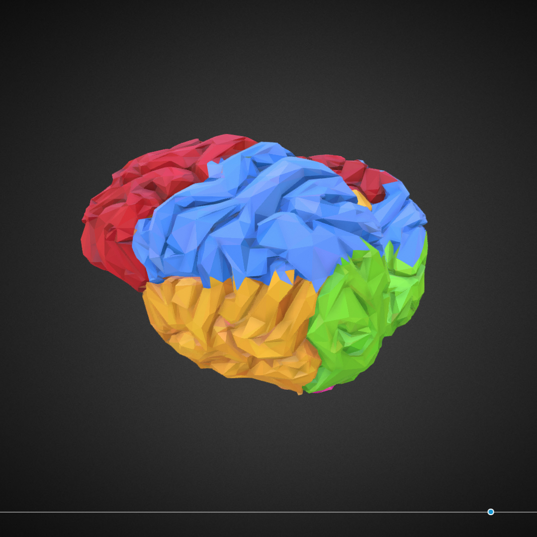 low polygon art medical brain color 3d model 3ds 270563