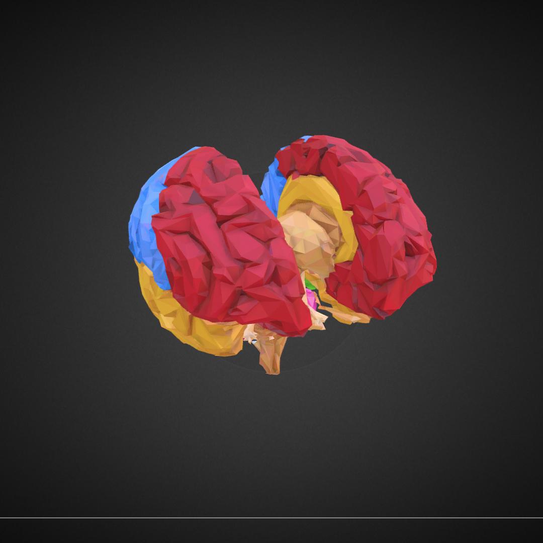low polygon art medical brain color 3d model 3ds 270565