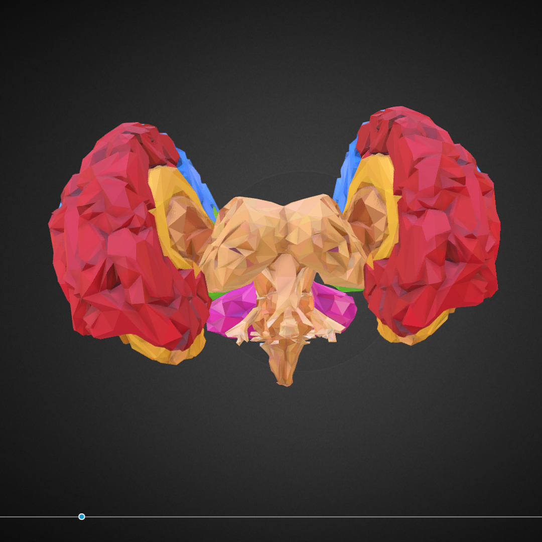 low polygon art medical brain color 3d model 3ds 270566