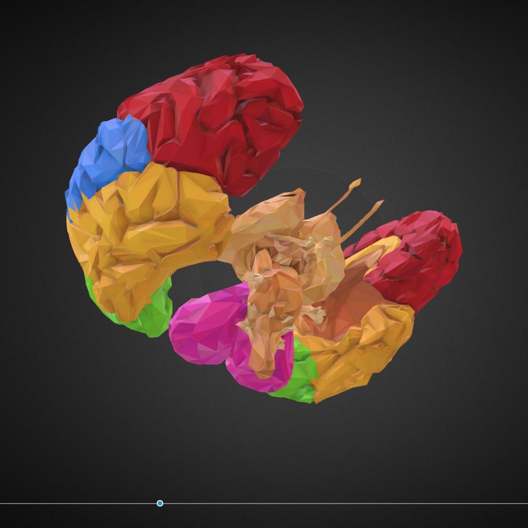 low polygon art medical brain color 3d model 3ds 270568