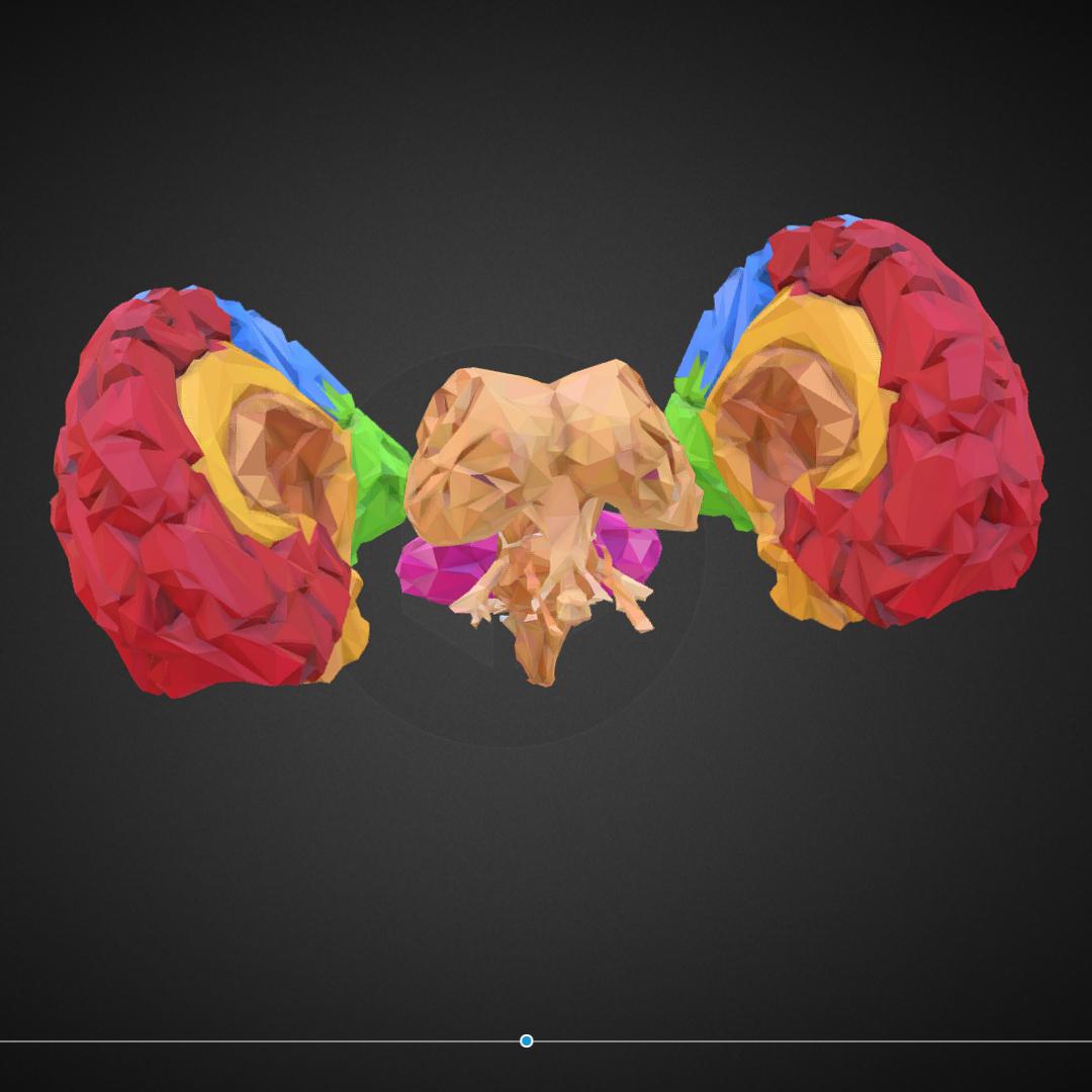 low polygon art medical brain color 3d model 3ds 270572