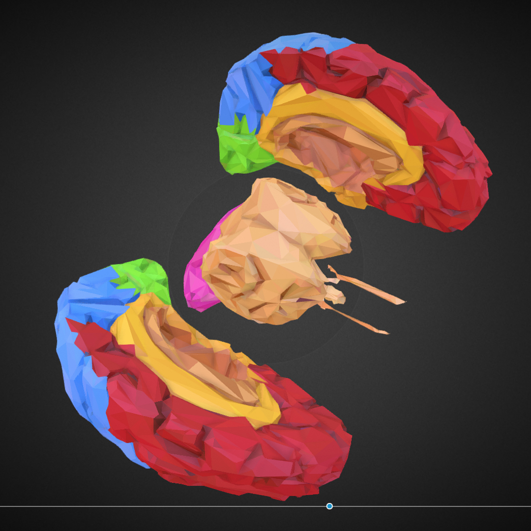 low polygon art medical brain color 3d model 3ds 270573