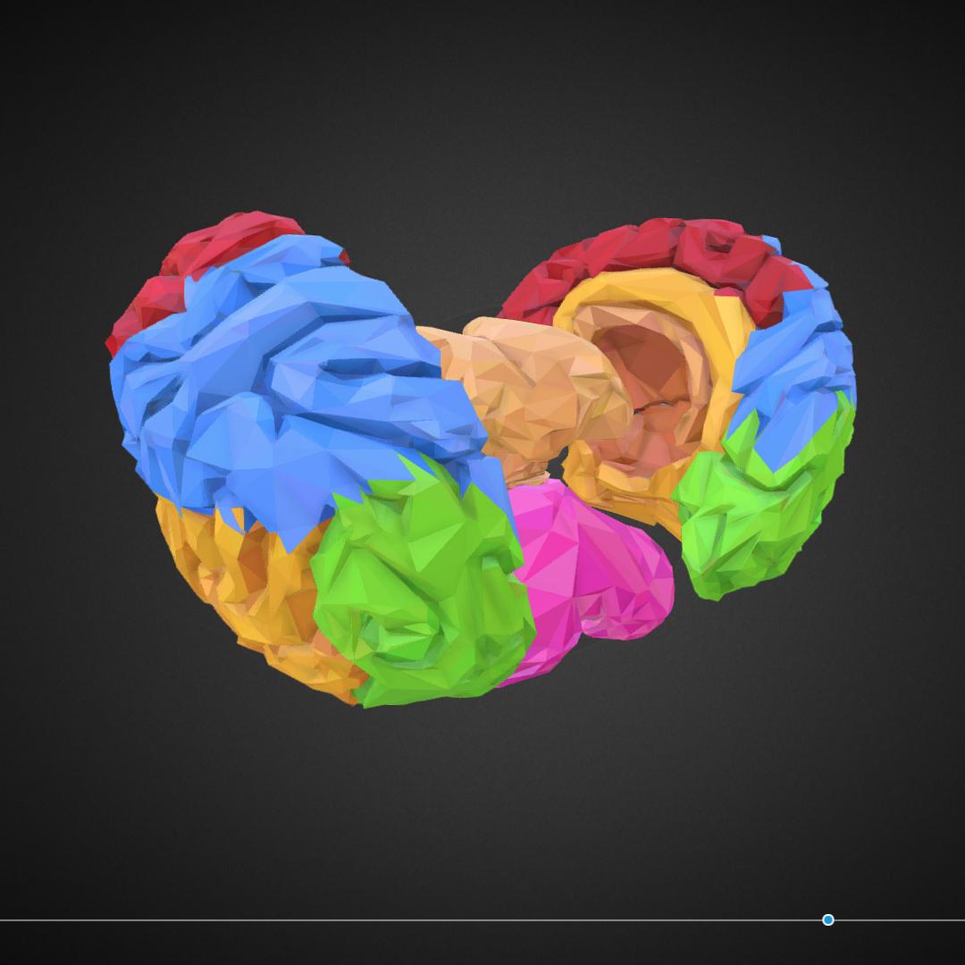 low polygon art medical brain color 3d model 3ds 270575