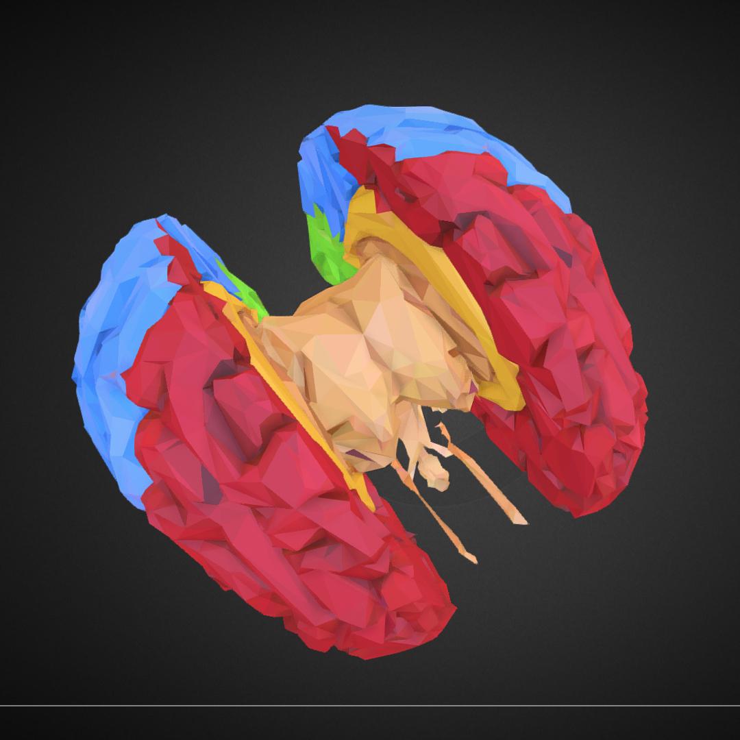 low polygon art medical brain color 3d model 3ds 270576