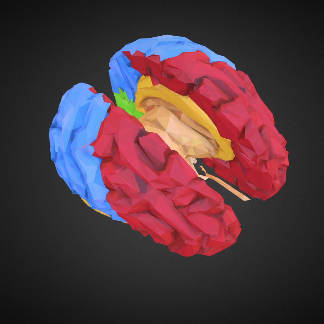 low polygon art medical brain color 3d model 3ds 270577