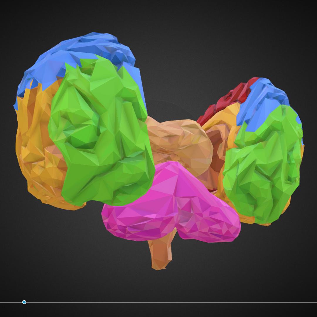 low polygon art medical brain color 3d model 3ds 270579