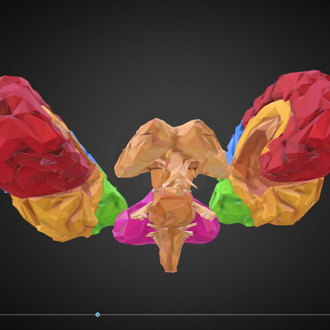 low polygon art medical brain color 3d model 3ds 270580