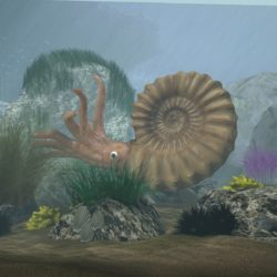 Ammonite with complete underwater scene 3d model 0