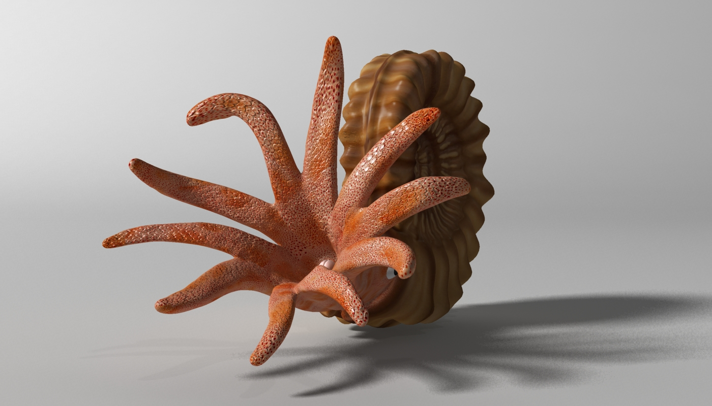 ammonite with complete underwater scene 3d model max fbx  obj 270748