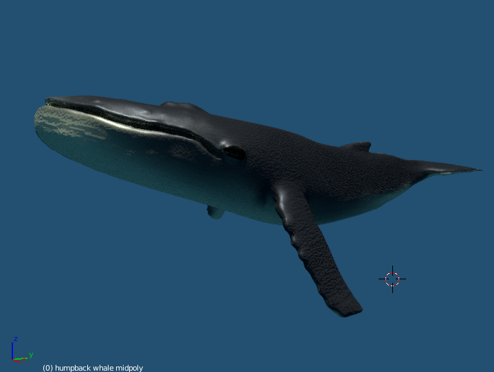 humpback whale 3d model game ready